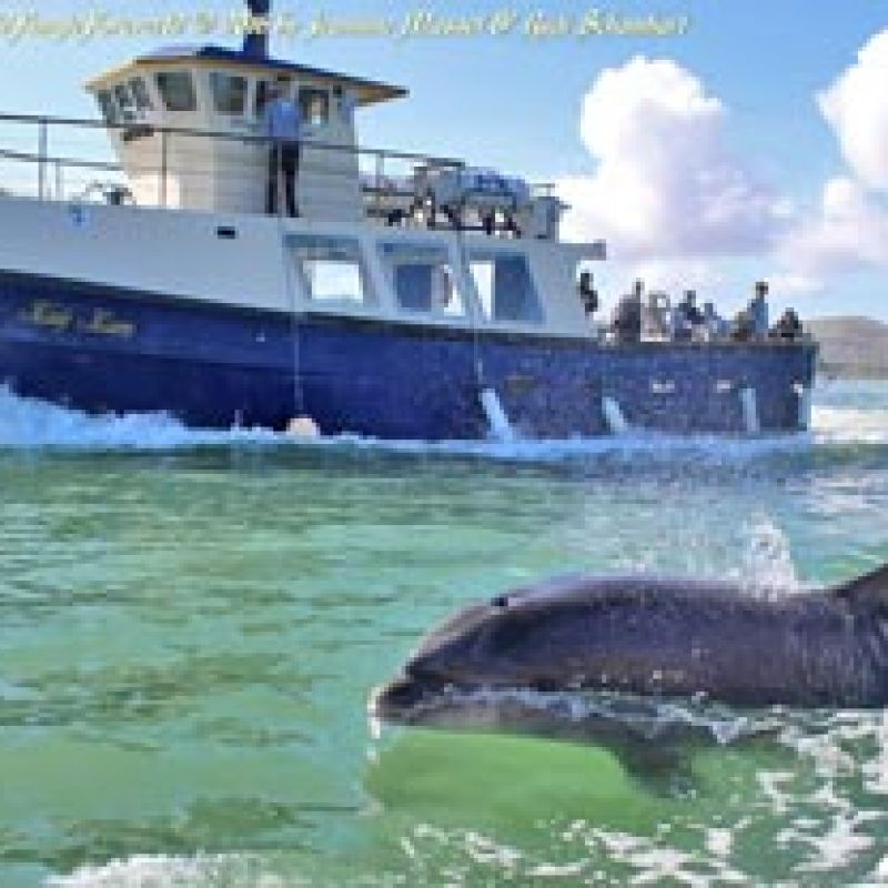 Fungie Dolphin Tours