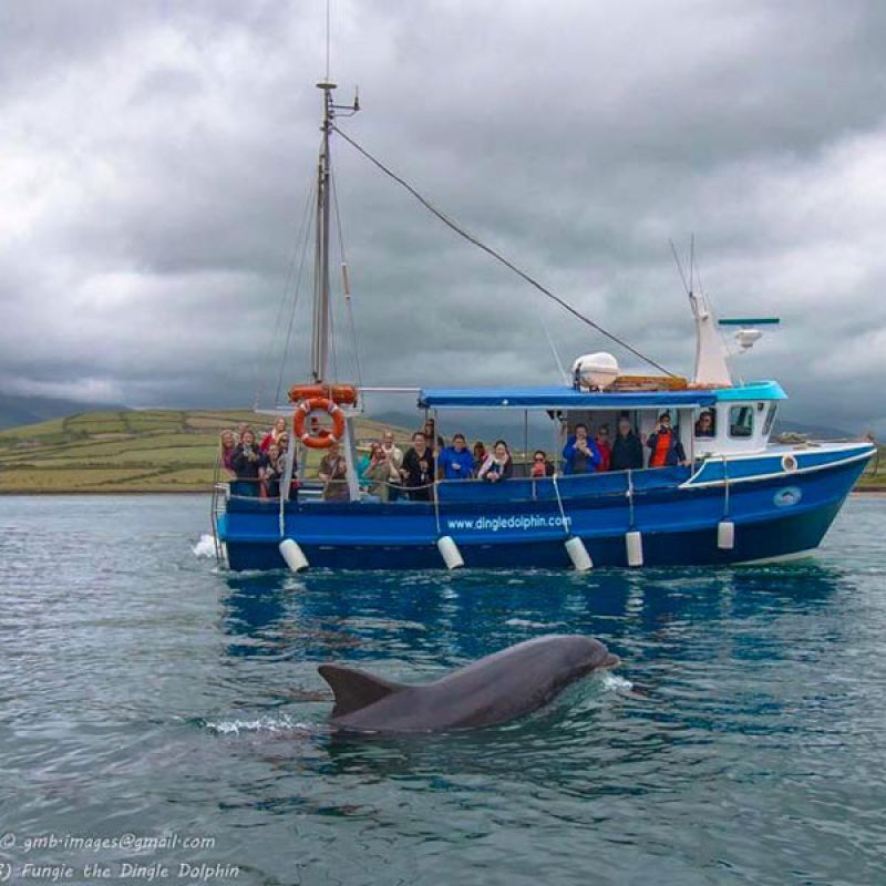 Dingle Dolphin Tours